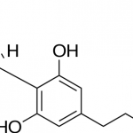 A guide to Cannabidiol (CBD)