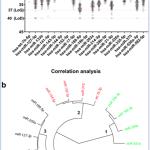 TAmiRNA participates in research extending miRNA applications in bone disease