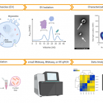 TAmiRNA offers one-stop-shop characterization of extracellular vesicles
