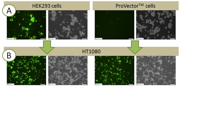 ProVector™: Protecting production cells from problematic transgene expression