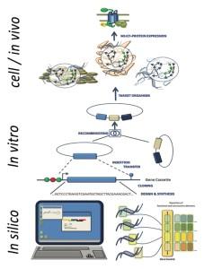 Workflow for bioengineering processes