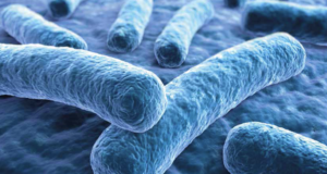Legionella Pneumophila bacteria under microscope