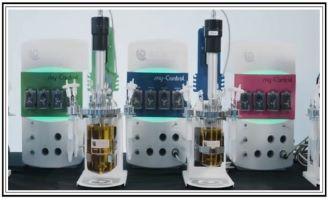Applikon Mini Bioreactor