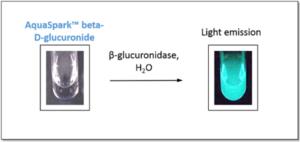Luminescent β-glucuronidase tests using AquaSpark™