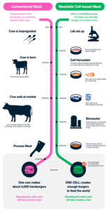 Meatable will produce hamburgers in 3 weeks or less. Conventional meat takes at least 3 years (source: www.meatable.com)