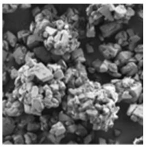 PrismaLac® 40 microscopic image