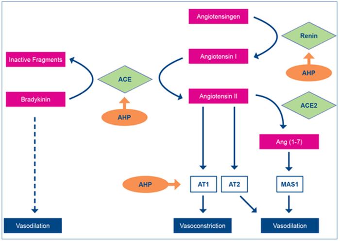Bachem antihypertensive food-derived peptides