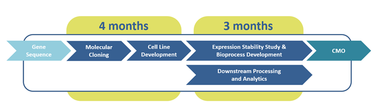UGA Biopharma´s high-speed cell line development workflow
