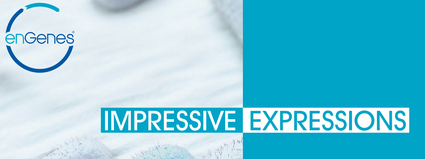 Growth-Decoupled Protein Production – enGenes-X-press™
