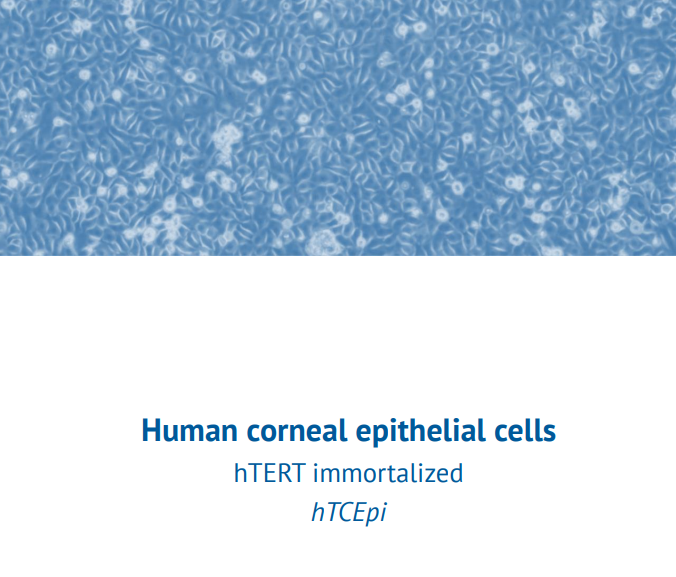 hTERT immortalized hTCEpi – Human corneal epithelial cells
