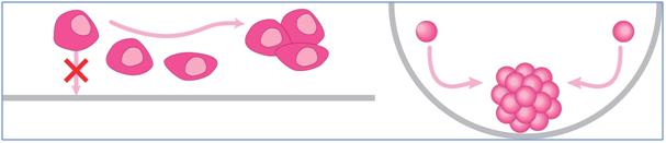 PHCbi PrimeSurface® Cell Culture labware