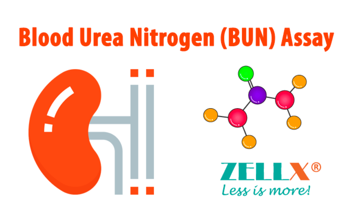 ZellBio identified as key supplier for BUN detection technology in emerging COVID-19 market